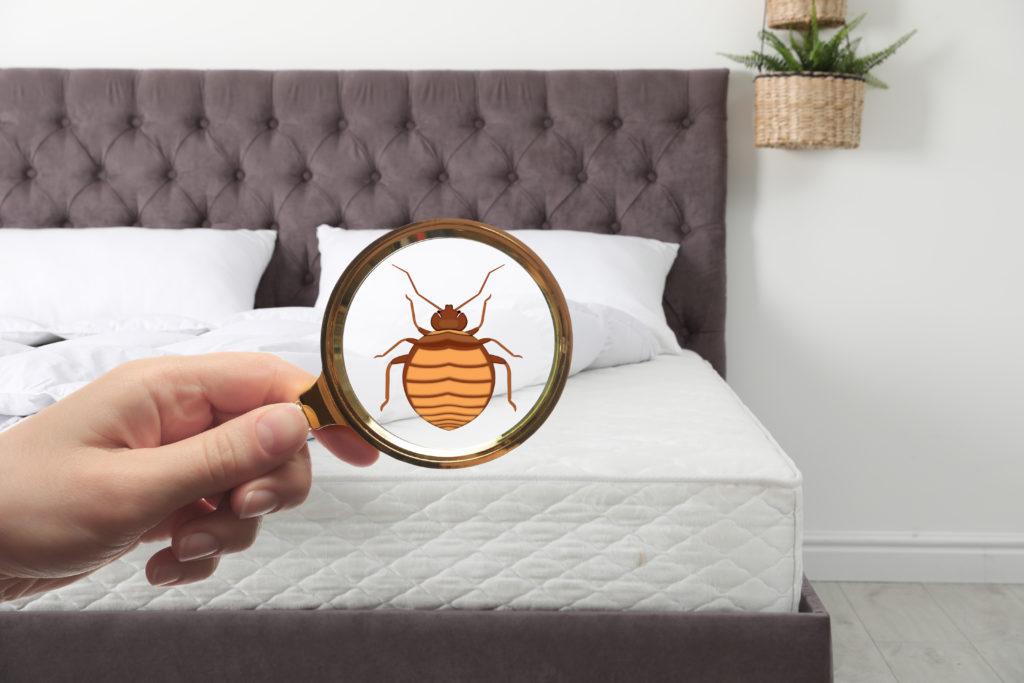 Ou se cachent les punaises de lit ?