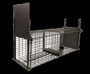 Nasse-Rats