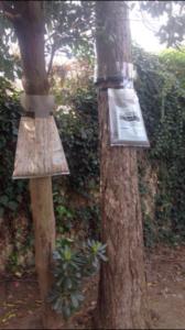 destrcution nids de chenilles processionnaires
